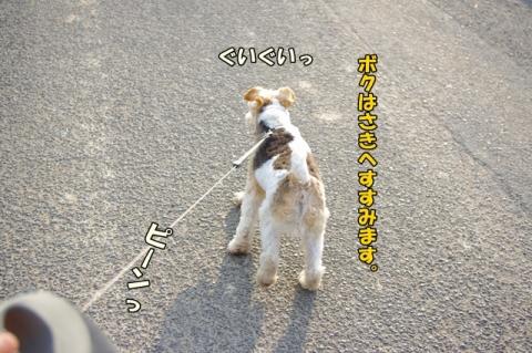 3ワンでの散歩③