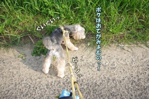 3ワンでの散歩②