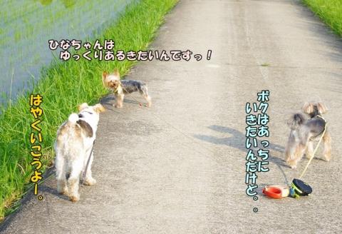 3ワンでの散歩⑨