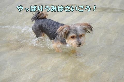 海へ 2014⑨