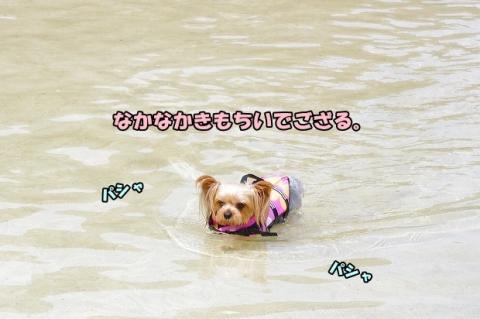 海へ 2014 21