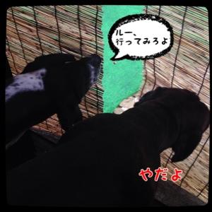 fc2blog_20140608094331519.jpg