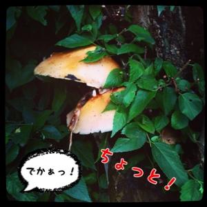 fc2blog_20140609163522697.jpg