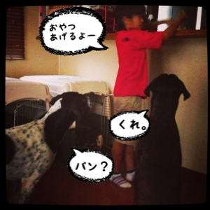 fc2blog_201406252156074b7.jpg