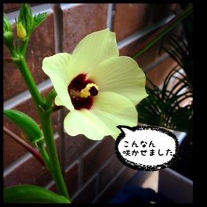 fc2blog_20140713154642fde.jpg