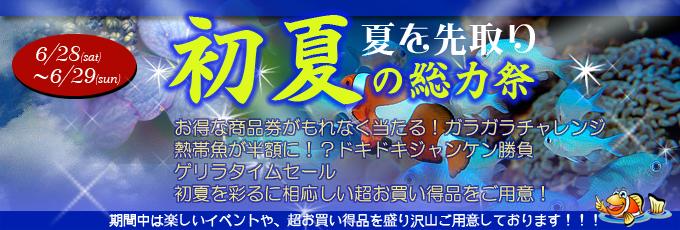 banner_earlysummer_20140627120825d2e.jpg