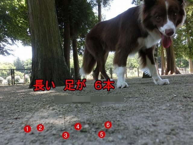 nanahusi 8 5 (12)