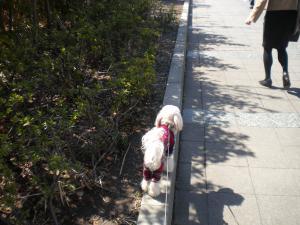 3月8日・縁石散歩
