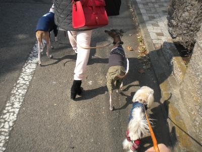 駒沢散歩・3月9日③