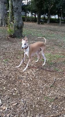 野性児バンビ