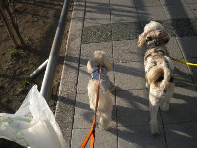 並んで歩くレオ&ラスク