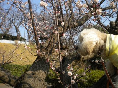 梅とらっくん・3月12日①