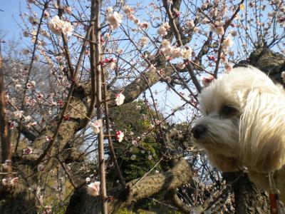 梅とらっくん・3月12日②