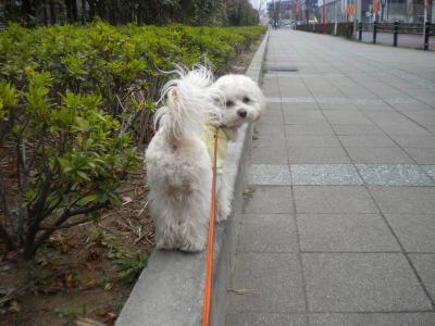 3月19日・レオ君と散歩①
