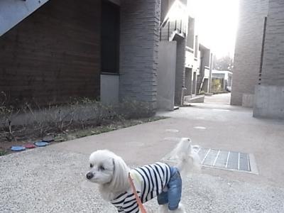 レジーナ2日目・朝のお散歩①