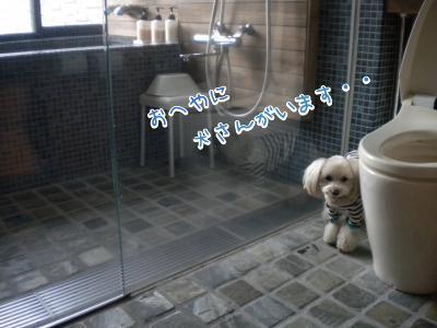 レジーナ富士・トイレに避難のラスク