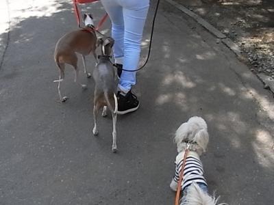 レジーナ2日目・3ワンお散歩