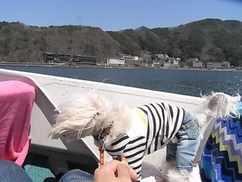 4月8日・河口湖ボート③