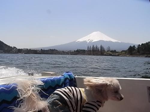 4月8日・河口湖ボート④