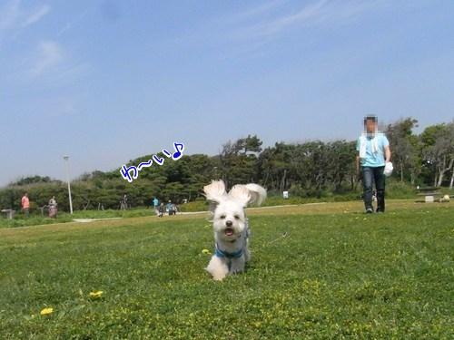 5月4日・城ケ島公園広場・走るラスク
