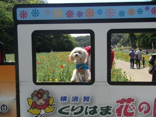 5月4日・くりはま花の国②