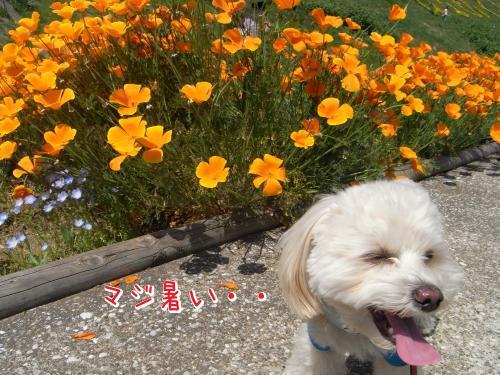 5月4日・くりはま花の国・お花とらっくん