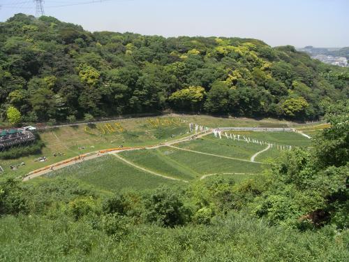 5月4日・くりはま花の国景色①
