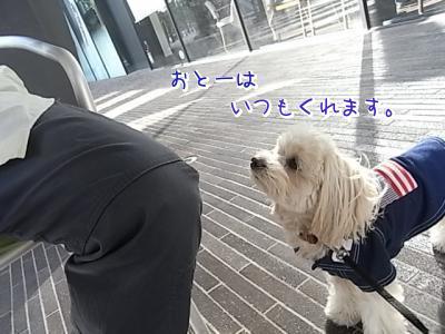 5月 10日・WEE BEES欲しがりらっくん②