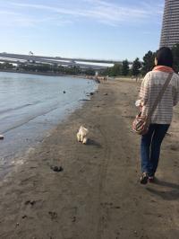 浜辺のらっくん&おかー