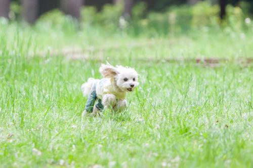 草原を駆け抜ける①