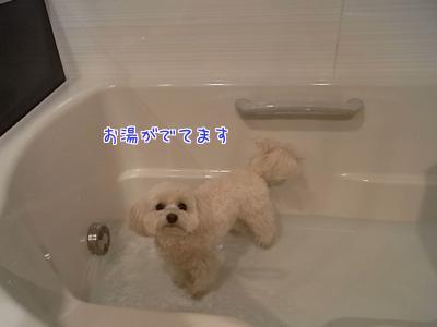 お風呂らっくん