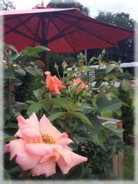 ガーデンお花①