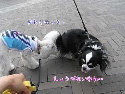 ラスク&ちょこ③