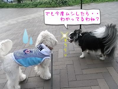 ラスク&ちょこ⑤