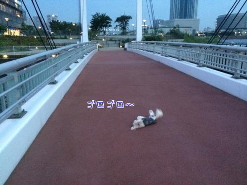 橋でゴロゴロ