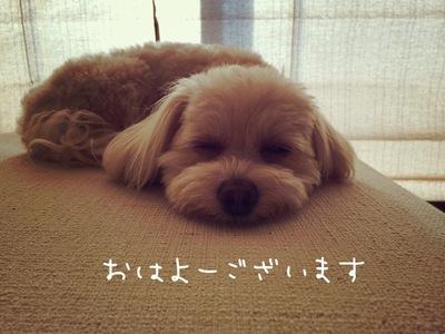 まだ眠いよ~