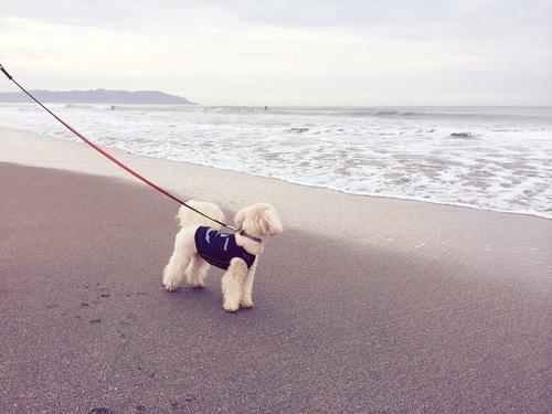 海とらっくん