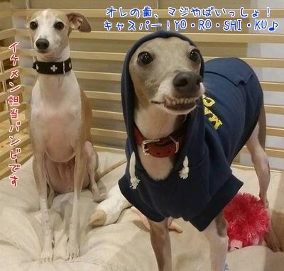 キャスバン紹介