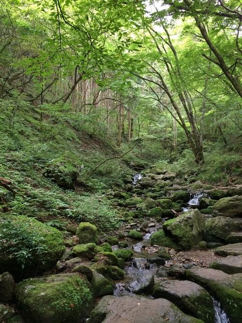 御岳山の自然