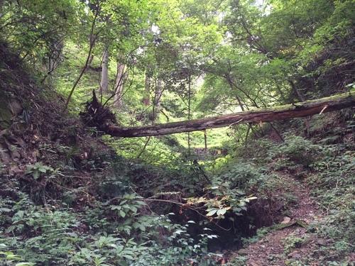 トトロの森?