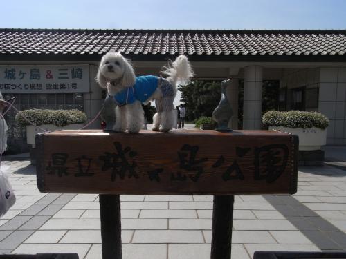 5月4日・城ケ島公園入口のラスク