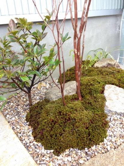 杉苔の小庭