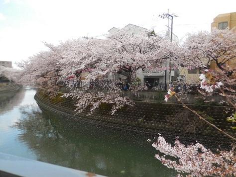 14-hanami4.jpg