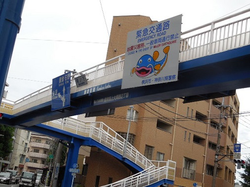 su-kurogoma25.jpg