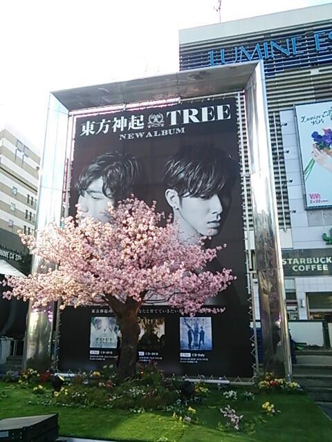 新宿巨大ビジュアル展示 桜の木
