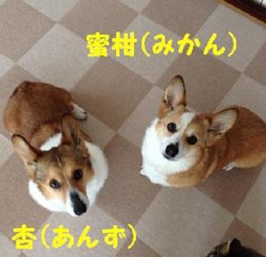杏ちゃん・蜜柑ちゃん