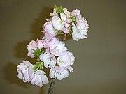 花と夢さぬきの春10