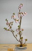 花と夢さぬきの春9