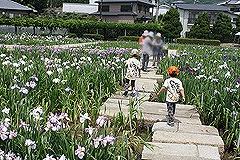 14かわつ花菖蒲園12