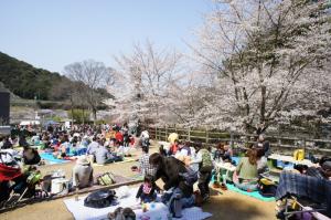 山中渓の桜まつり02